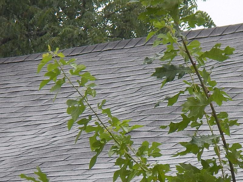 Roof-wavy
