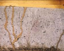 termite-tunnel